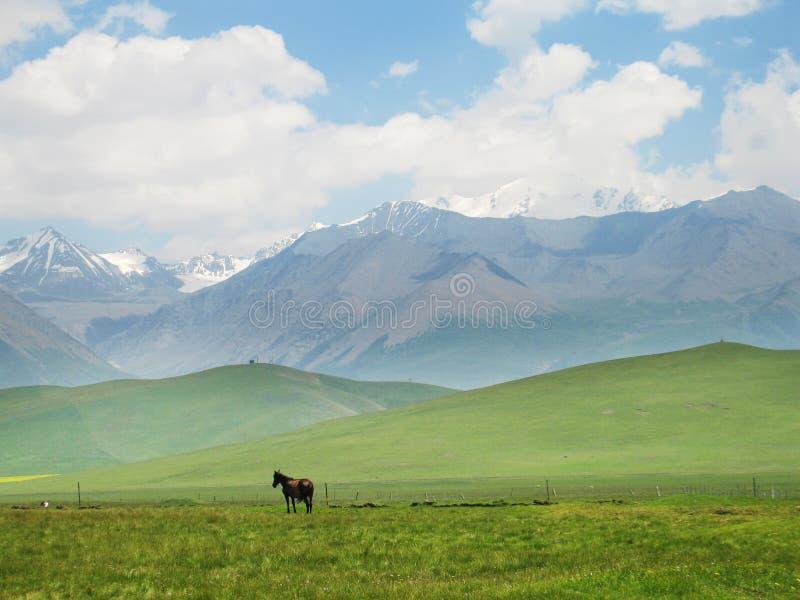 Montagna della neve con un cavallo immagine stock