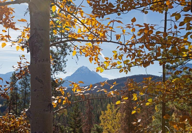 Montagna di Edith Cavell fotografia stock