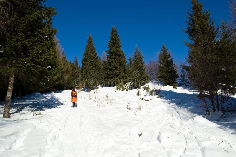Montagna di inverno che trekking immagini stock
