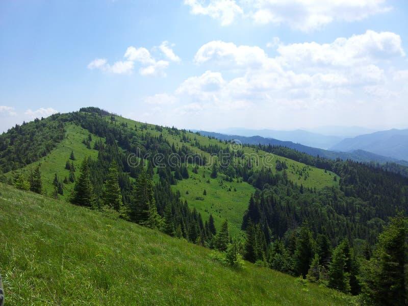 Montagna di Parashka, montagne Carpathians immagini stock libere da diritti