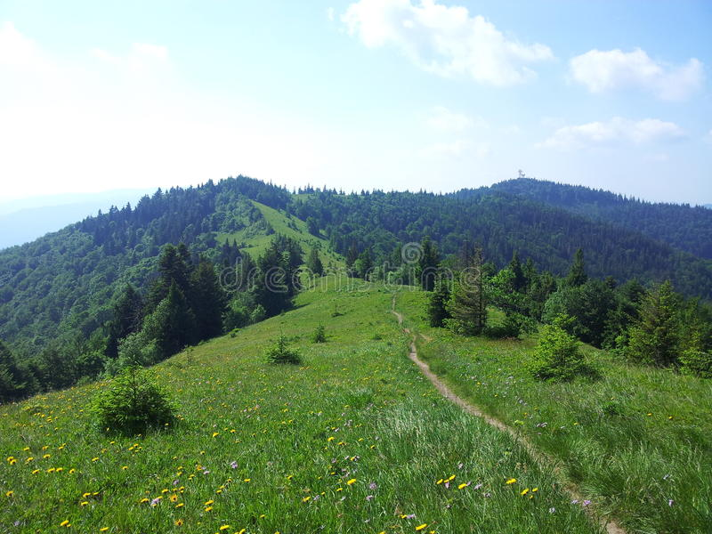 Montagna di Parashka, montagne Carpathians immagini stock