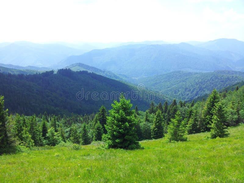 Montagna di Parashka, montagne Carpathians fotografia stock