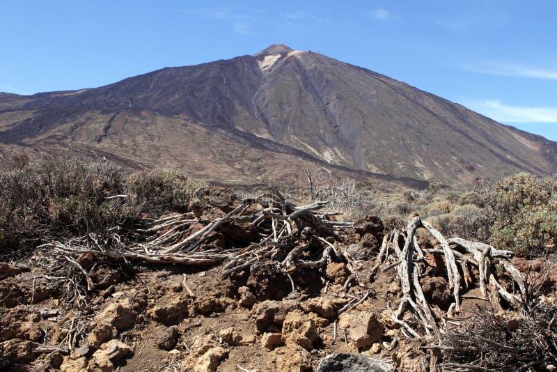 Montagna di Teide, Tenerife immagine stock libera da diritti