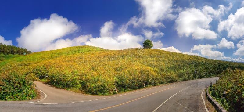 Montagna e strada del giacimento di fiore con bluesky fotografie stock