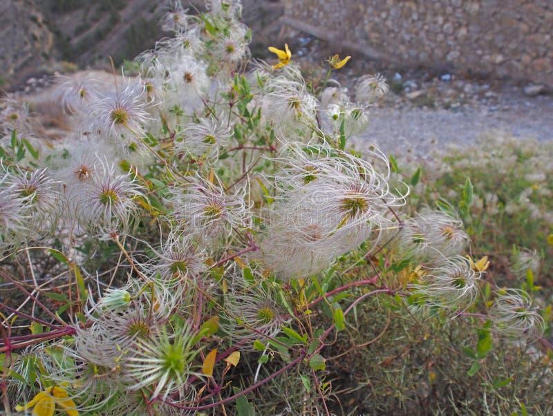 Montagna Flores nel giorno soleggiato fotografie stock libere da diritti