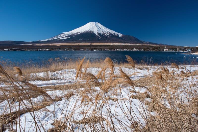 Montagna Fuji con erba fotografia stock libera da diritti