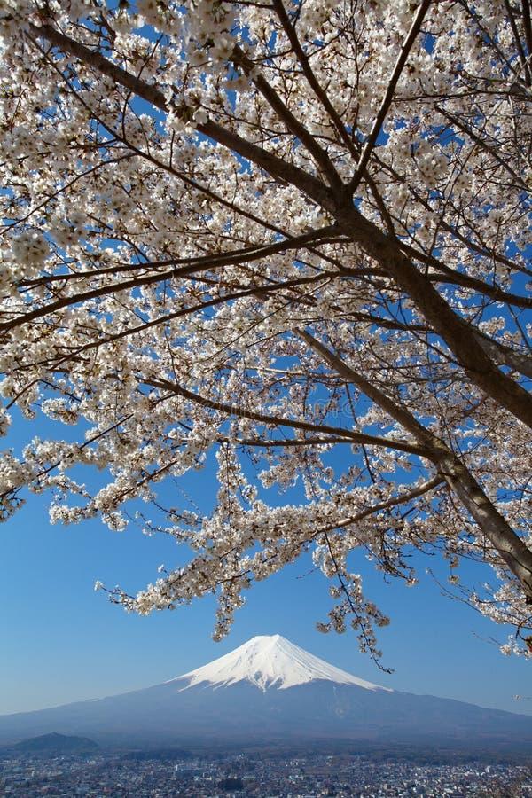 Montagna Fuji e fiore di ciliegia sakura immagini stock libere da diritti