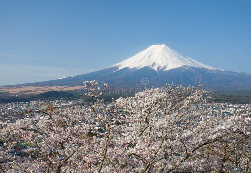 Montagna Fuji e fiore di ciliegia sakura immagine stock