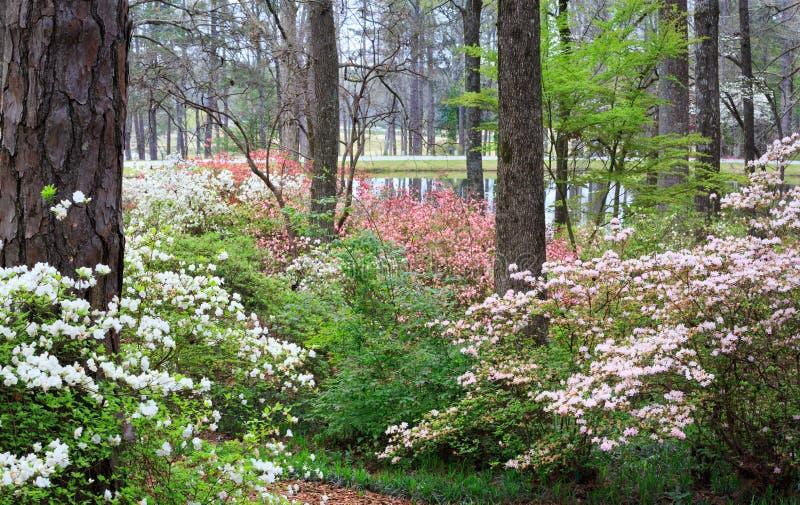 Montagna Georgia del pino del sentiero didattico dei giardini di Callaway immagine stock libera da diritti