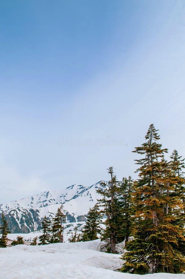Montagna incantante della neve delle alpi del Giappone su Tateyama Kurobe R alpina immagine stock libera da diritti