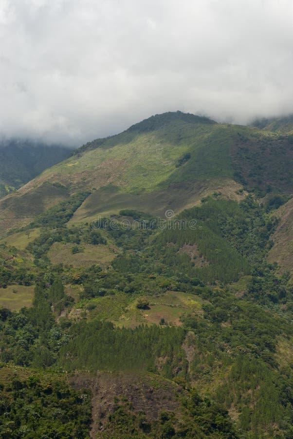 Montagna nella foresta fotografie stock