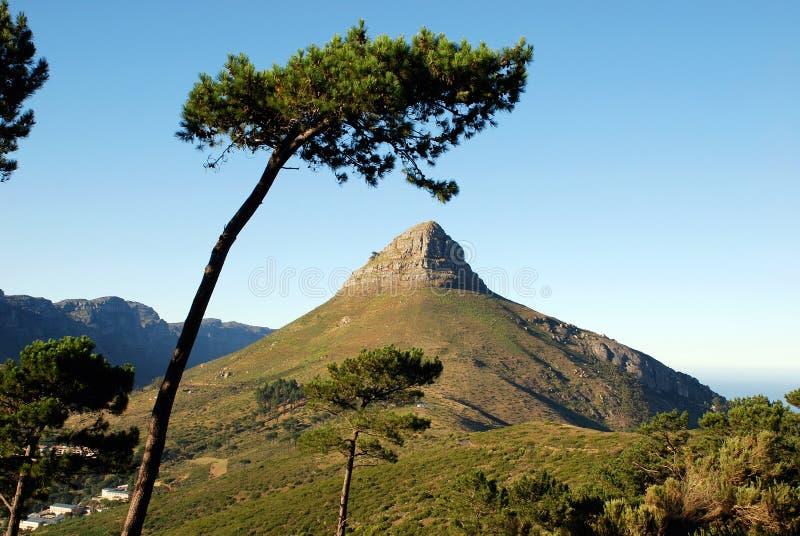 Montagne à Capetown images libres de droits