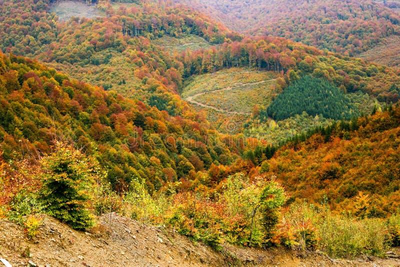 Download Montagne fotografia stock. Immagine di cielo, selva, albero - 7308830