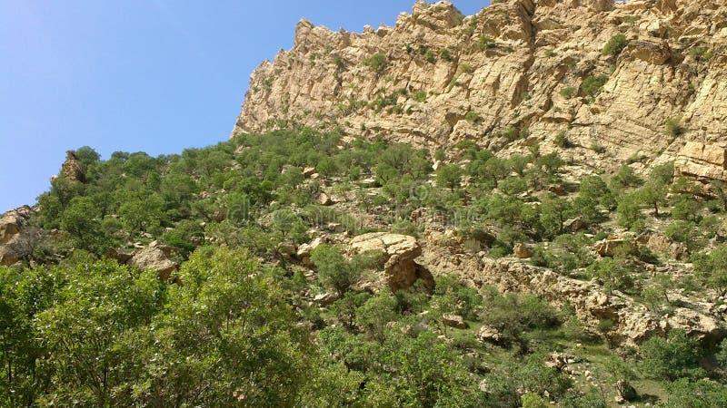 Montagne avec complètement d'arbre image libre de droits