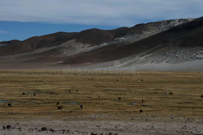 Montagne bolivienne photographie stock libre de droits