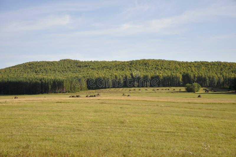 Montagne Campo verde con le tinte di giallo con i mucchi di fieno e gli alberi lontano Estate, augusta immagini stock libere da diritti