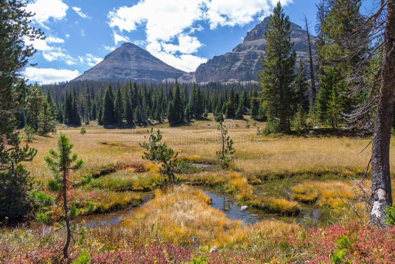 Montagne chauve et prés alpins, chemin détourné scénique de lac mirror, Utah photo libre de droits