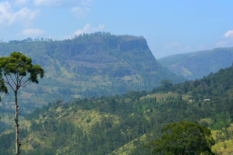 Montagne coperte di foresta nel paesaggio naturale dello Sri Lanka fotografia stock libera da diritti