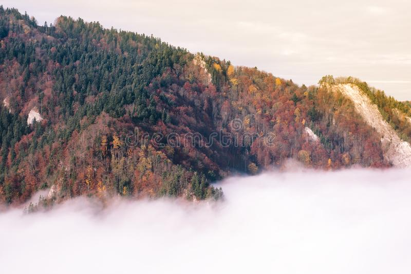Montagne couverte de forêt d'automne en brouillard au coucher du soleil photos libres de droits