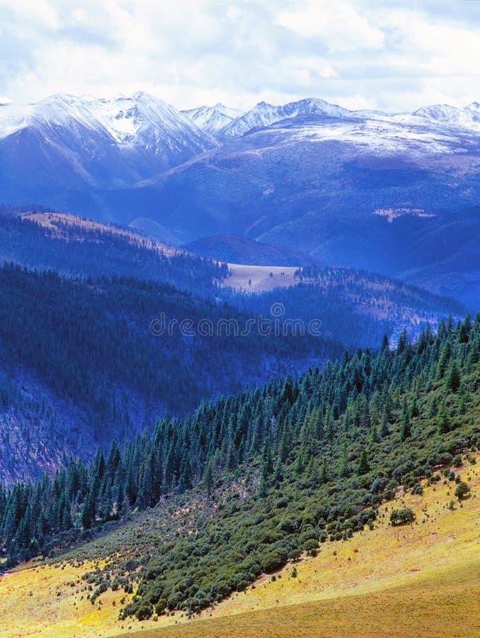 Montagne d'arbre et de neige images libres de droits