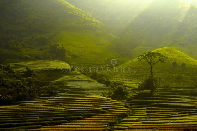 Montagne de Bavi photos libres de droits