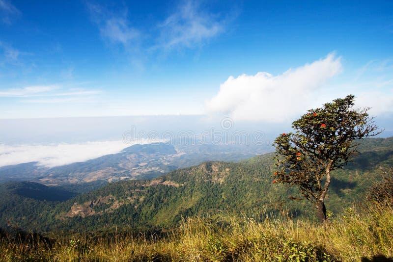 Montagne de Doi Intanon en matin brumeux photos libres de droits