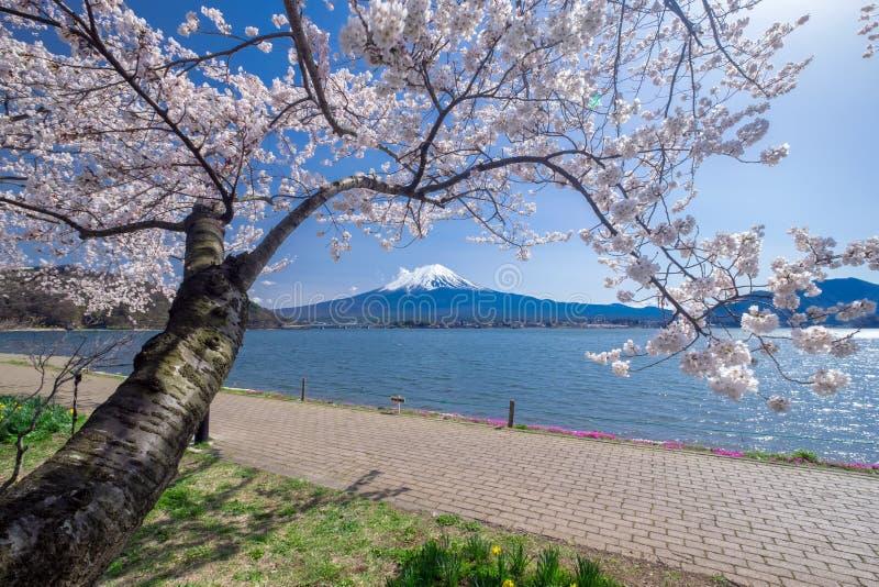 Montagne de fujisan avec des fleurs de cerisier au printemps lac kawaguchiko japon photo stock - Greffe du cerisier au printemps ...