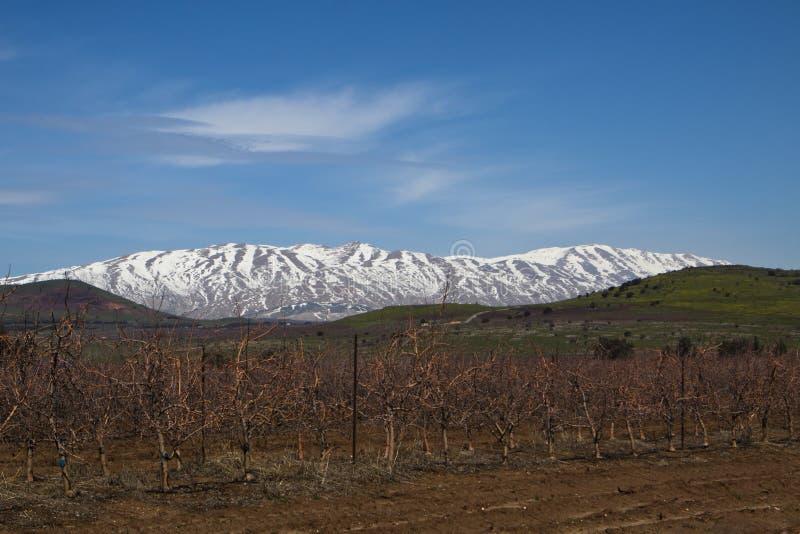Montagne de Hermon photo libre de droits