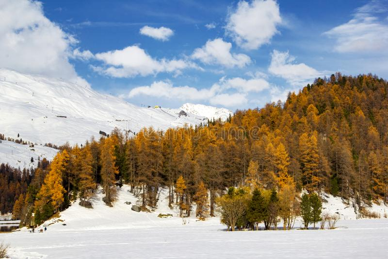Montagne de neige avec la dernière couleur jaune des arbres de mélèze images stock