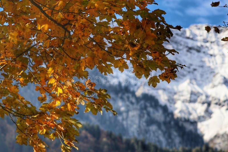 montagne de neige en automne images libres de droits