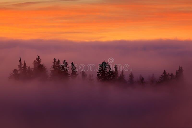 Montagne de Sumava, République Tchèque Vallée peu de minutes avant coucher du soleil en parc national Sumava Le matin rose et ora photos libres de droits