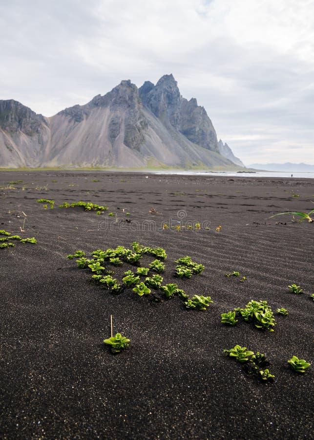 Montagne de Vestrahorn à la péninsule de Stokksnes en Islande image libre de droits