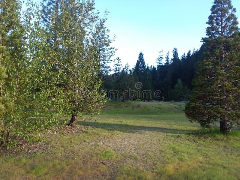 Montagne degli alberi della valle fotografia stock libera da diritti