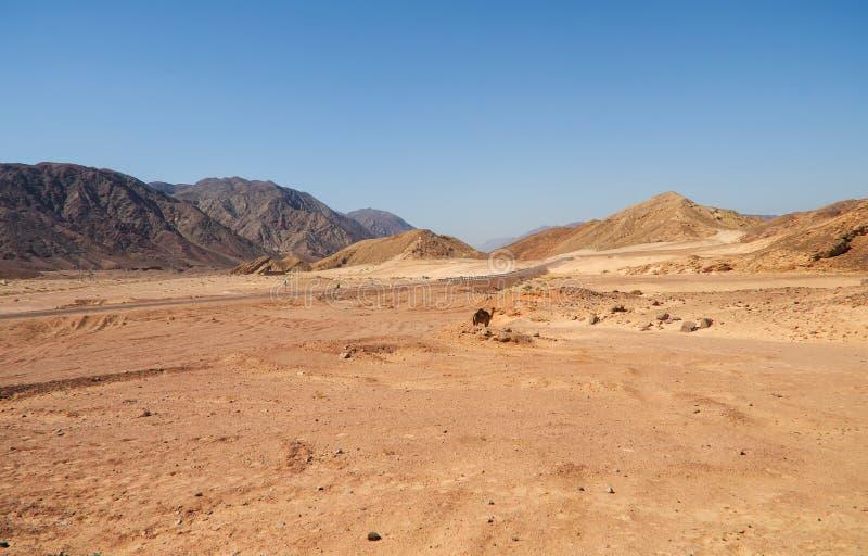 Montagne dei cammelli della strada del paesaggio del deserto fotografia stock libera da diritti