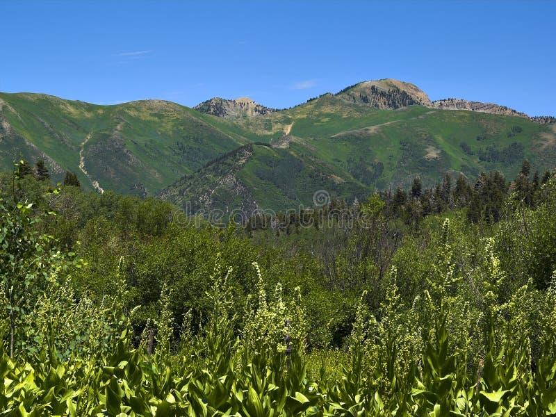 Montagne dell'Utah - 3 immagine stock libera da diritti