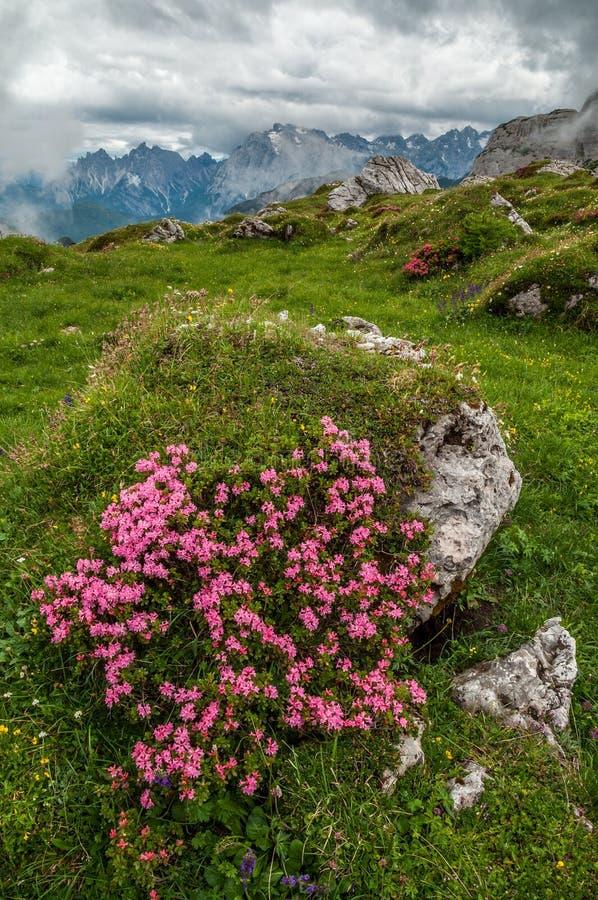 Montagne delle dolomia, da Paternkofel, l'Italia fotografia stock
