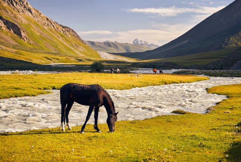 Montagne di еру del 'dei cavalli ÑˆÑ del Kirghizistan immagine stock libera da diritti