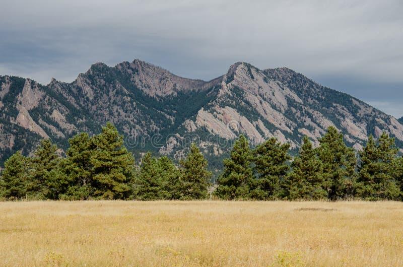 Montagne di ferro da stiro con la priorità alta del pino fotografia stock libera da diritti