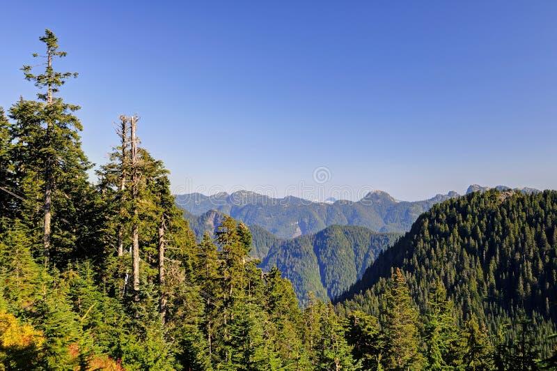 Montagne di osservazione dalla montagna di urogallo con le montagne della neve nella distanza immagini stock