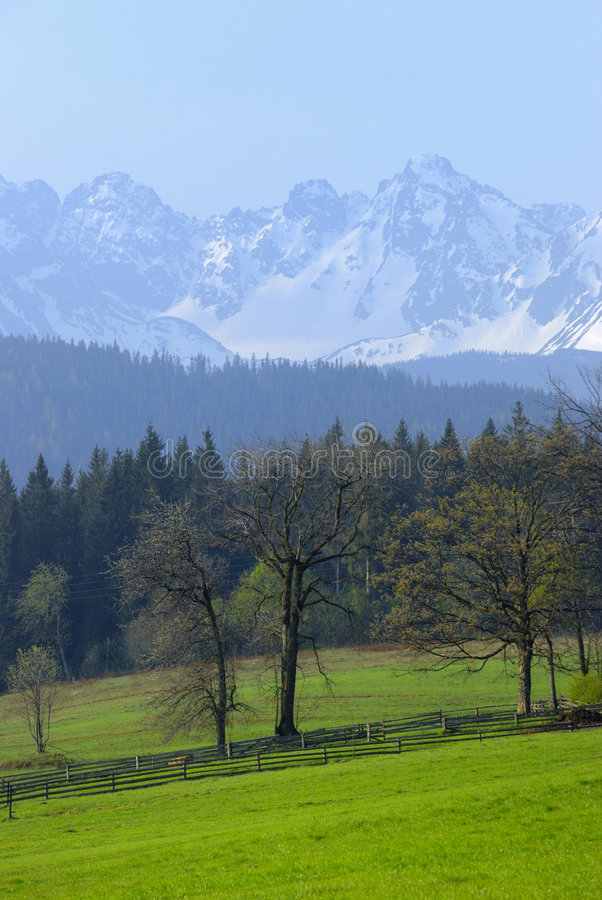 Montagne di Tatra come veduto da Bukowina fotografia stock libera da diritti
