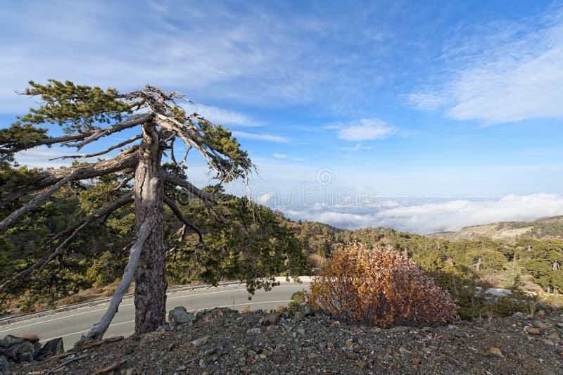 Montagne di Troodos, Cipro fotografie stock libere da diritti
