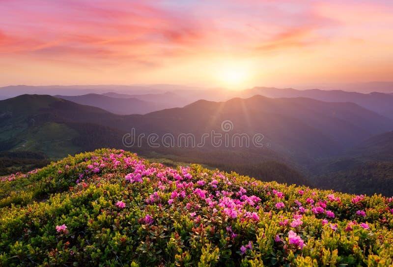 Montagne durante il fiore e l'alba dei fiori immagine stock
