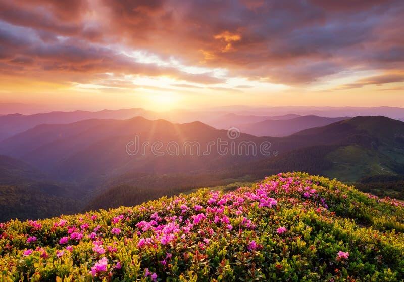 Montagne durante il fiore e l'alba dei fiori Fiori sulle colline della montagna Bello paesaggio naturale all'ora legale fotografia stock libera da diritti