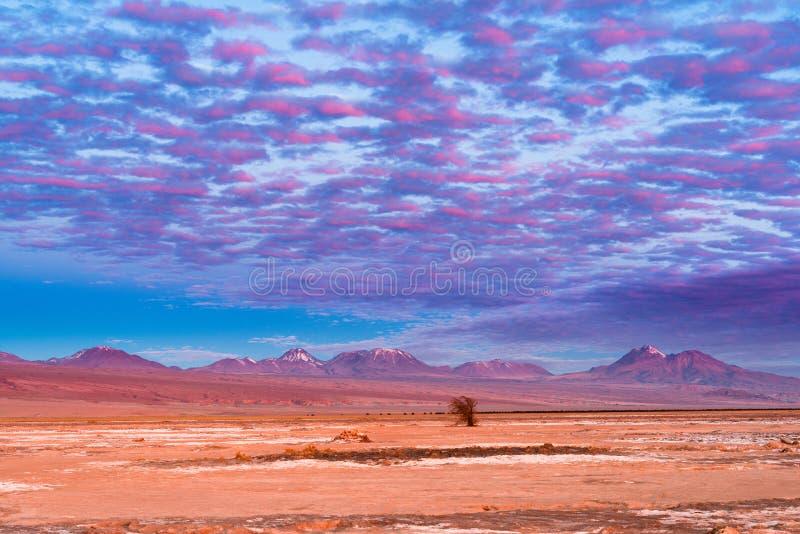 Montagne e vulcani nel altiplano immagini stock