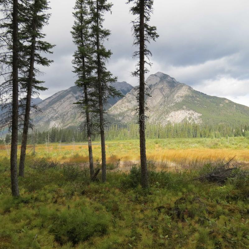 Montagne ed alberi in Banff, Canada fotografie stock libere da diritti