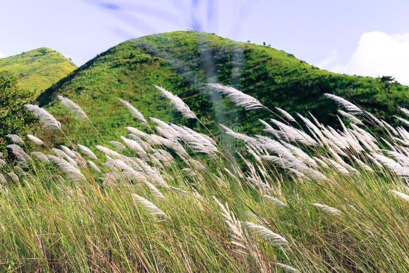 Montagne et l'herbe photo libre de droits