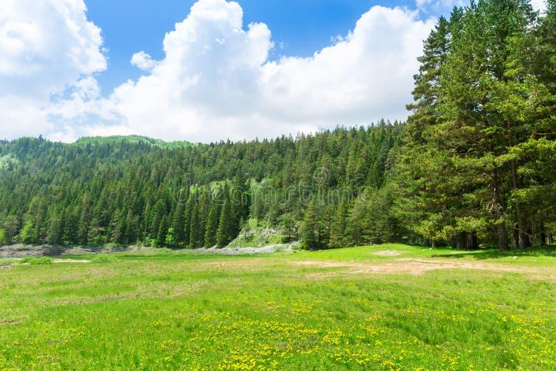 Montagne et paysage vert de Monténégro photographie stock
