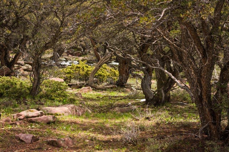 Montagne Forest Glen In Northwest Colorado Mountains d'acajou photos libres de droits