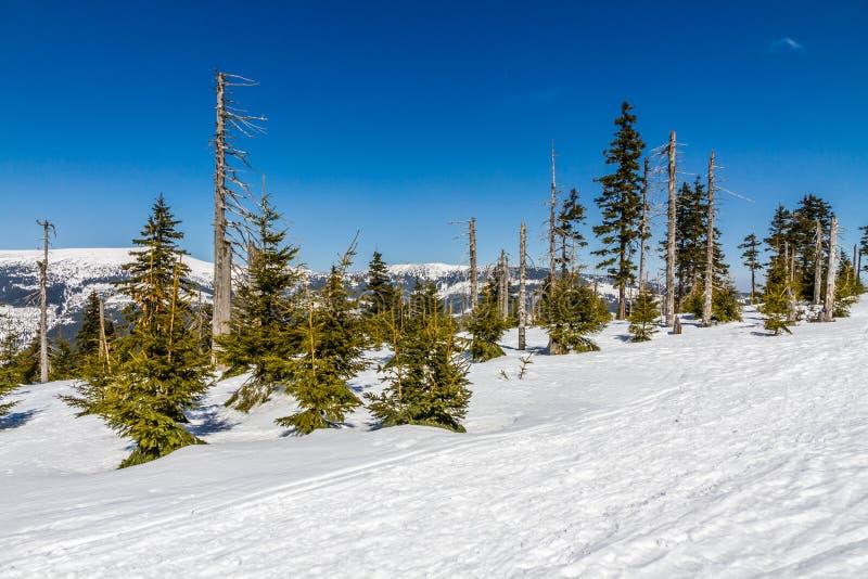 Montagne giganti di Krkonose nell'inverno - Cechia fotografie stock libere da diritti