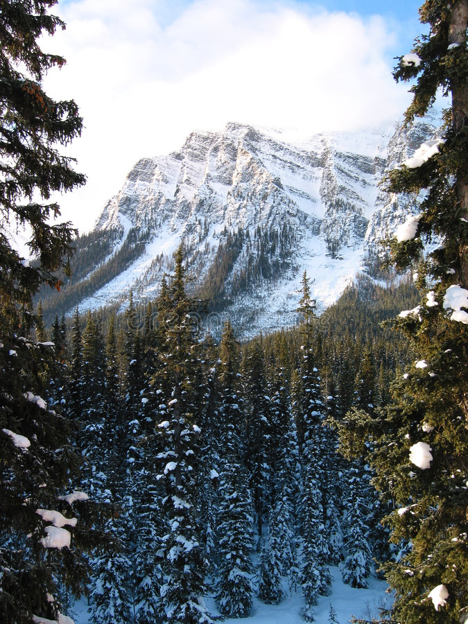 Montagne majestueuse avec une forêt neigeuse 2 image stock